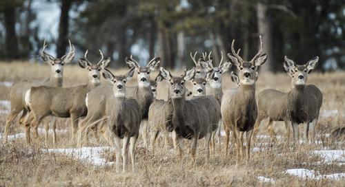 Panhandle reports increased deer harvest