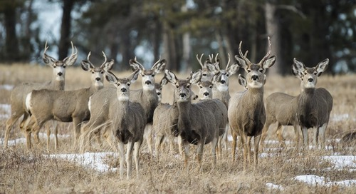 Panhandle reports increased deer harvest