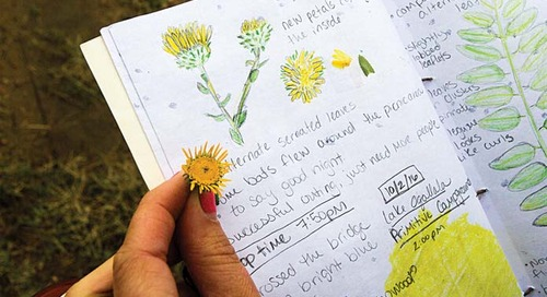 Discovering the Outdoors Through Nature Journaling