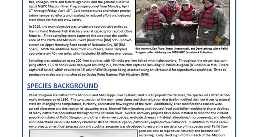 2018 Pallid Sturgeon Broodstock Collection