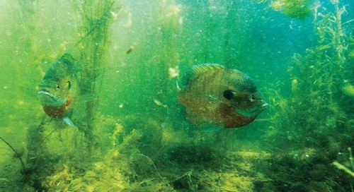 Twenty Years of Aquatic Habitat Program