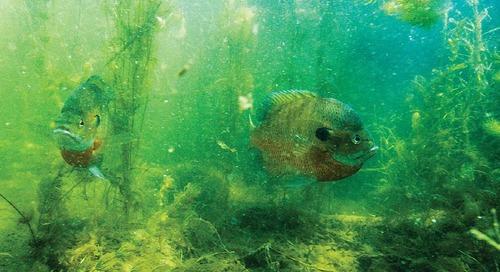 Aquatic Habitat Program Celebrates 20 Years