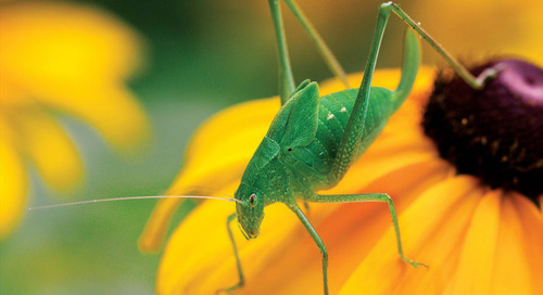 10 Tips for Insect Photography