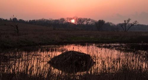 Success in the Salt Marsh