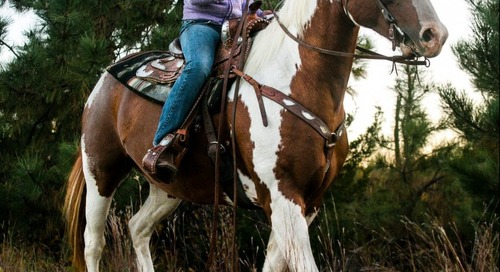 Horseback Ride to Support 4-H