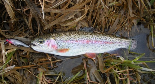 Update on Spring Trout Stocking