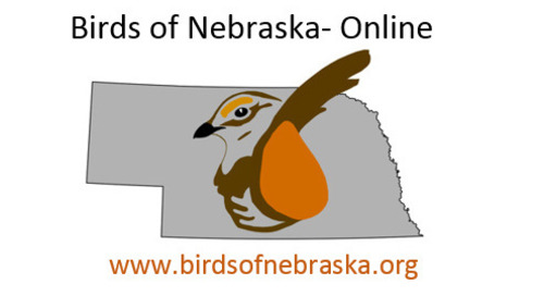 The end of the Nongame Bird Blog