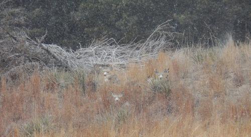 Deer Opener