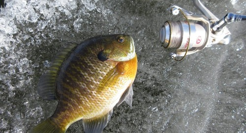 Panfish System on Ice