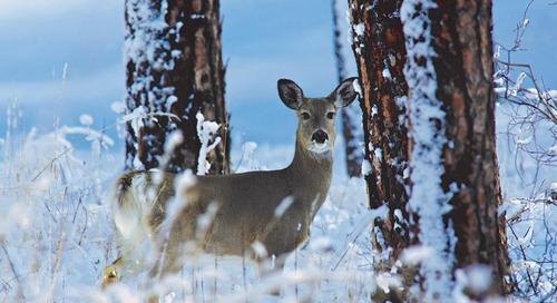 Post-Season Scouting For Deer