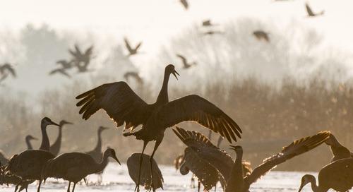 Bird migration, appreciation offer educational opportunities