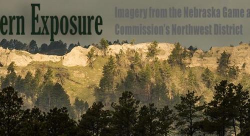 Northwestern Exposure: Taking refuge