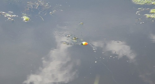 Sunfishing