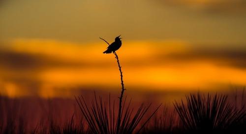 Get involved in the 2020 Nebraska Bird Month Challenge