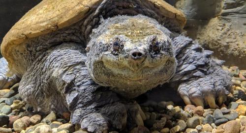 Turtle Men