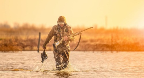 Thoughts on Waterfowl
