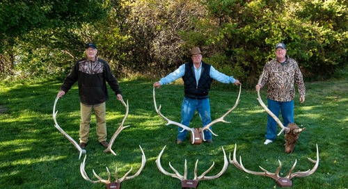The Clearwater Elk – A Follow-up