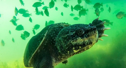 Turtles: Slowing Down for Winter