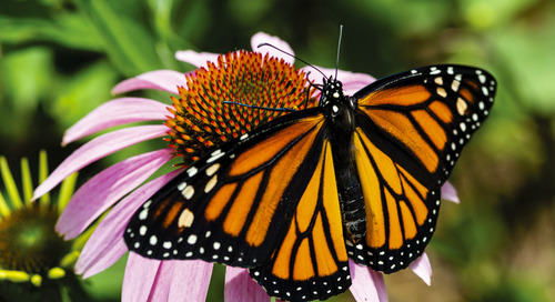 Celebrate Nebraska Pollinator Week June 22-28