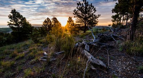 Preserving the Pine Ridge
