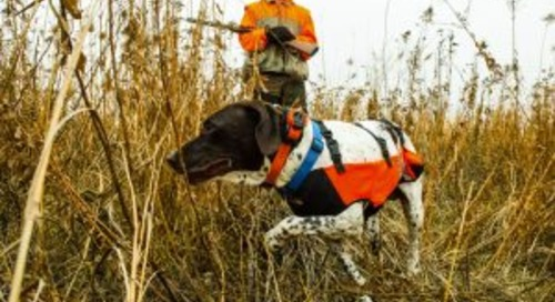 Upland bird opportunities await Nebraska hunters this fall