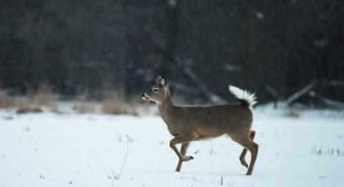 Special antlerless deer hunts at Mahoney SP, Platte River SP, Schramm Park SRA