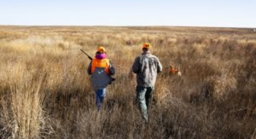 Oct. 24-25 youth pheasant season includes Special Youth Hunts