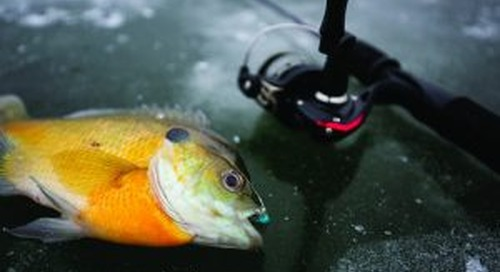 Specialized rods, reels not necessary for ice-fishing beginners