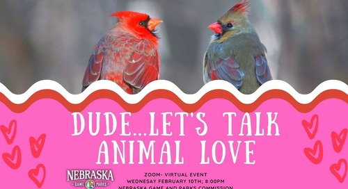 Adults only: Virtual webinar talks animal love in time for Valentine's Day