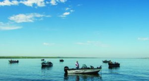 No foolin', annual walleye spawn is here