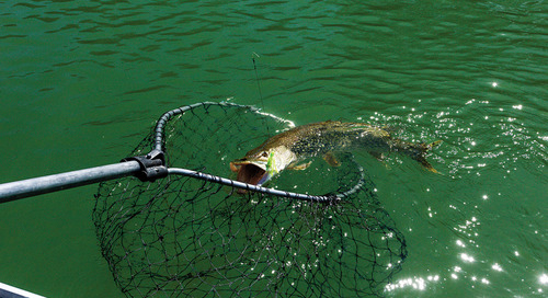 Tips for Catching Northern Pike