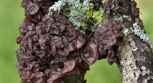 The Wonderfully Named Fungi
