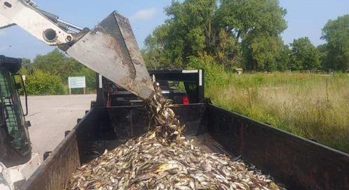 Two Rivers Trout Lake Renovation