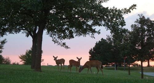 Camping Options near Omaha for Big Baseball Games