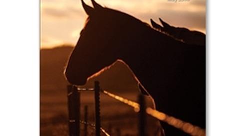 Good Life, Great Rides: Nebraska Horse Camp and Trails