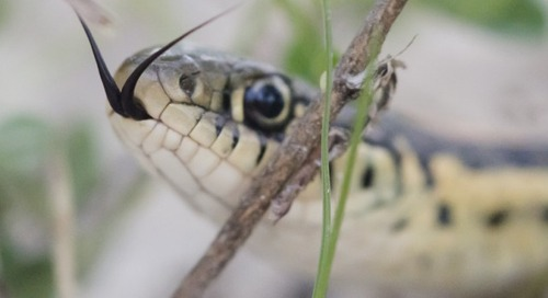 Panhandle Passages: One for the Snakes