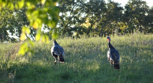 21 Reasons to Fall Wild Turkey Hunt in Nebraska