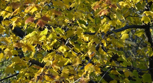Top Spot for Fall Color Viewing on WOWT 6 Outdoors