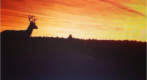 Sunset Deer