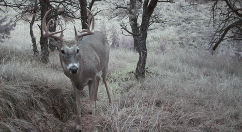 Protected: Trail Camera Tips