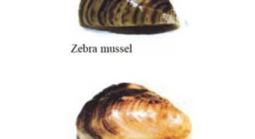 News on the Aquatic Invasive Species Front