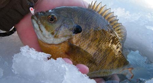 The Great Outdoor Radio Show Goes Ice Fishing