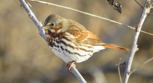 Birding Nance and Merrick Counties