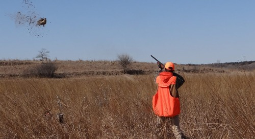 Spring Break:  Sporting Clays, Pheasants, Chukars, Fun and Memories
