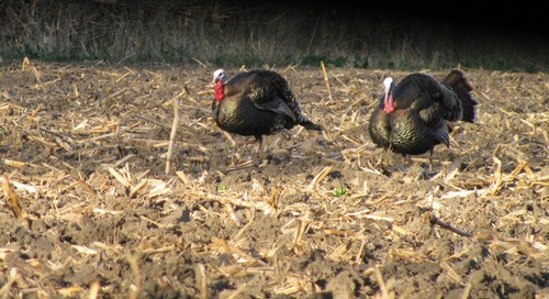 2015 NGPC Spring Turkey Hunting Workshops