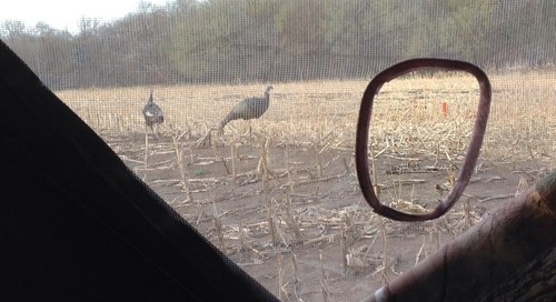 Early Season Turkeys Can Be Fickle