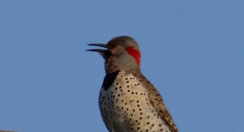 Bird Quiz; Birding at Heron Haven