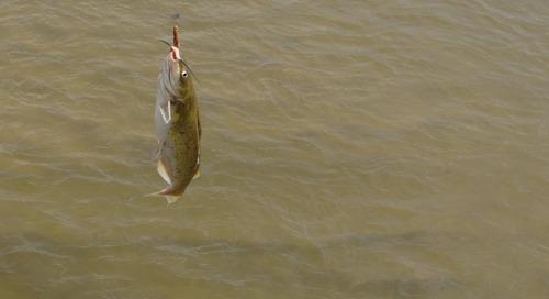 Catfishin' on WOWT 6 Outdoors