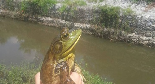 Bullfroggin' on WOWT 6 Outdoors