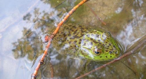 It Is Froggin' Time!
